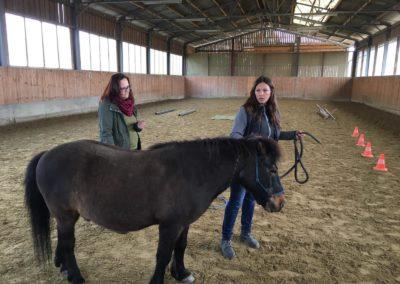 Impulscoaching mit Pferden