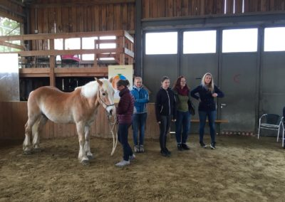 Impulscoaching mit Pferden1
