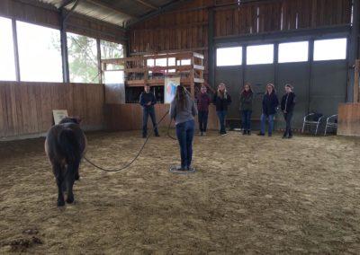Impulscoaching mit Pferden10