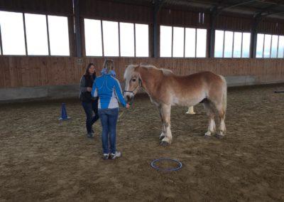 Impulscoaching mit Pferden2