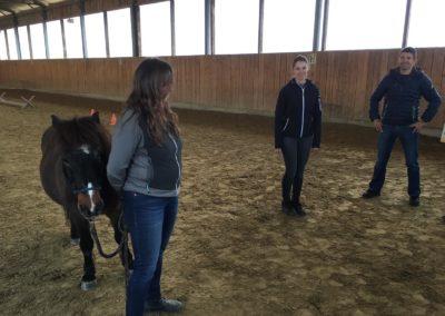 Impulscoaching mit Pferden3