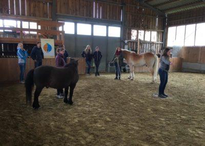 Impulscoaching mit Pferden4