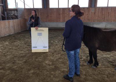 Impulscoaching mit Pferden6