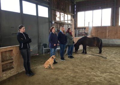 Impulscoaching mit Pferden8